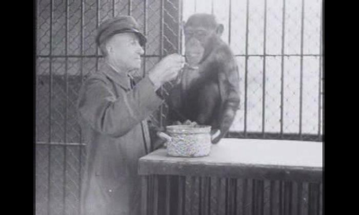 Ben jij de kunstenaar/verhalenverteller die ons mee neemt in een meeslepend 'dierentuin'- verhaal.